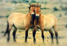 Rozlučme se sprázdninami na hřbetu koně