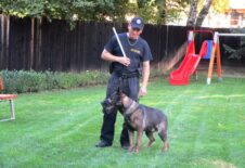 Ukázka výcviku služebních psů pro pěstounské rodiny